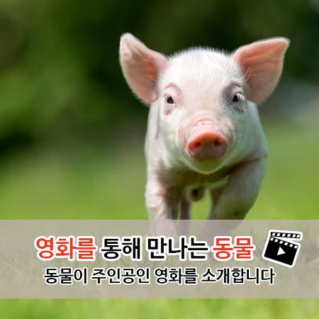 영화를 통해 만나는 동물 - 동물이 주인공인 영화를 소개합니다