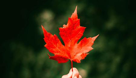 '찰나의 계절' 가을을 즐기는 방법