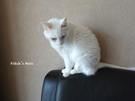 고양이 피부병 치료기