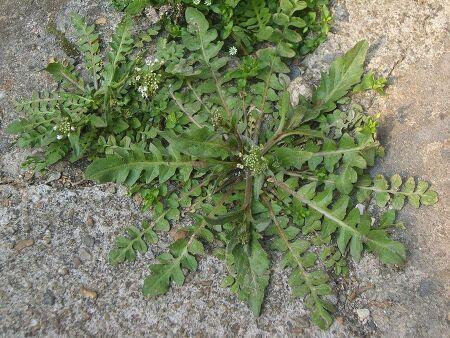 1(2) 민지의 꽃