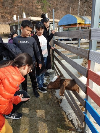 의림초 '단양 느티나무학교' 농촌문화 체험학습