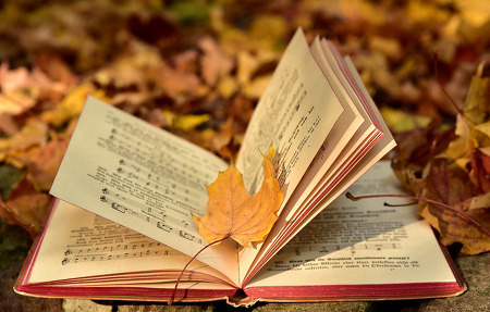 [네카인 이야기] 가을, 육체의 양식보다 마음의 양식을 쌓자!
