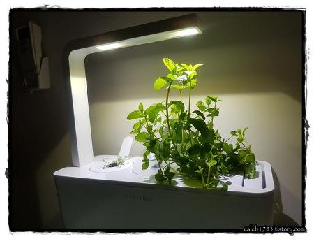 클릭앤그로우 - 스마트 가든 (Click & Grow, Smart Garden)