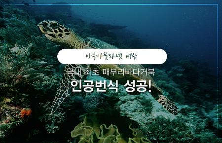 아쿠아플라넷 여수 국내 최초 매부리바다거북 인공번식 성공!