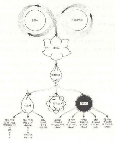 [동의보감과 yoga]  우리는 몸-마음 복합체이다(2)