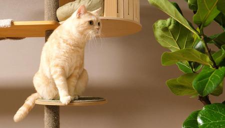 떡갈나무를 본 고양이들의 반응