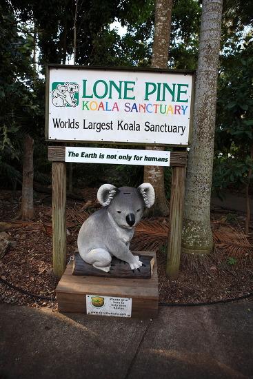 [호주 여행] 세계 최대의 코알라 보호구역, 론파인(Lone Pine) 코알라 생츄어리