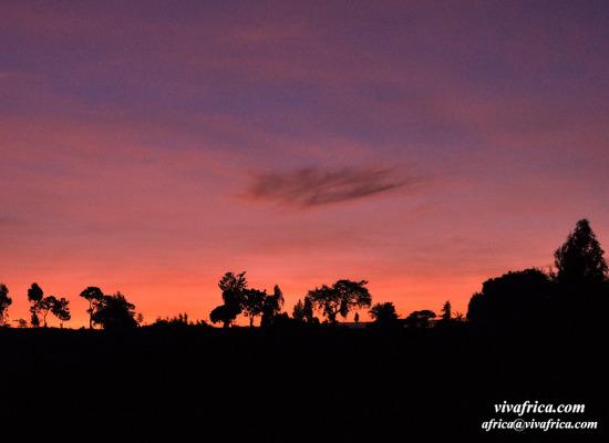 케냐 산골의 어느 봄날 아침