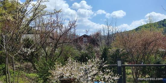 마당에 찾아온 봄