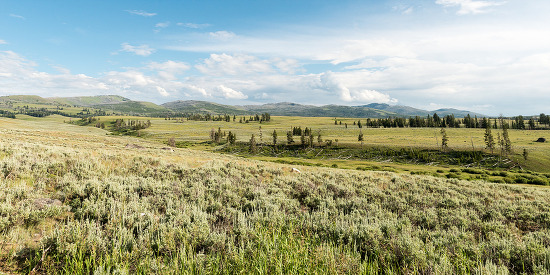 Meadowlands of Yellowstone National Park