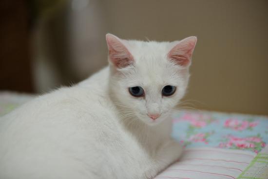 [마로의 출산소식] 아기냥이들이 태어났어요!!