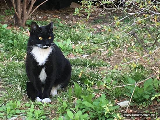 고양이들, 오랜만에 단정히 앉았네!