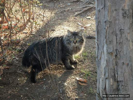 공원에서 만난 고양이