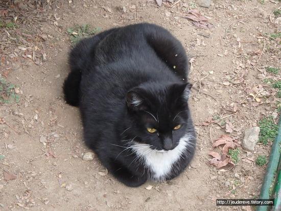 검정 고양이, 너는 누구냐?