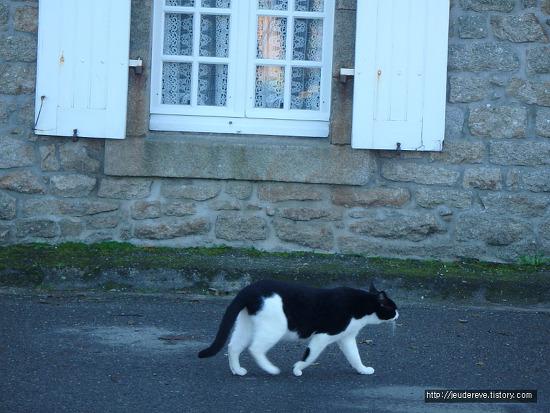 Locronan에서 만난 검정하양 얼룩 고양이(프랑스, 11월)
