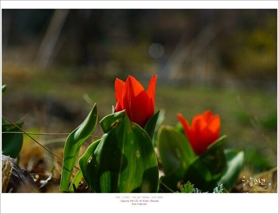부천 무릉도원수목원 (부천수목원) 봄 나들이