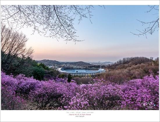 부천 원미산 진달래축제