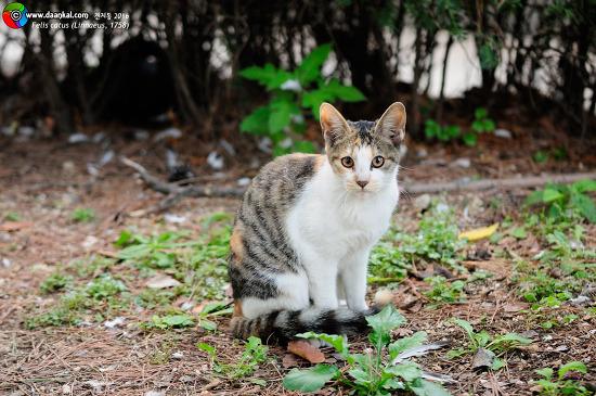 고양이, 수송동과 견지동
