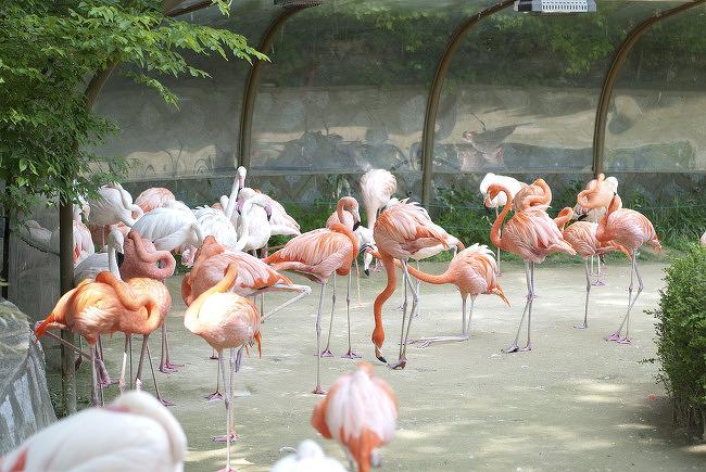 서울대공원 홍학