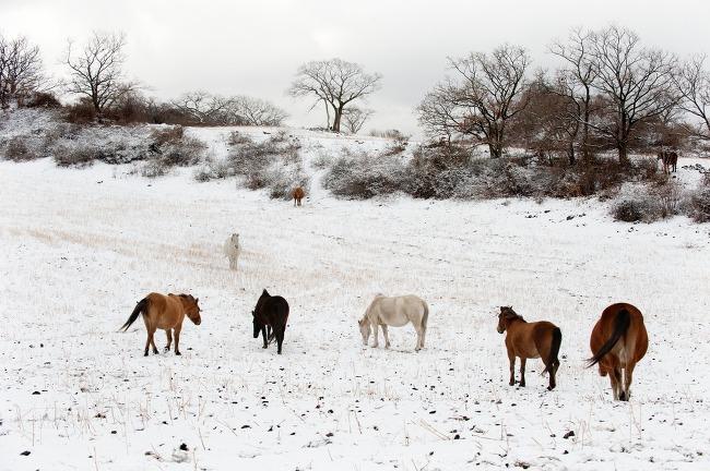 2013 제주겨울풍경