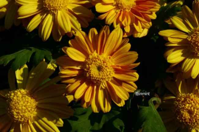꽃과 벌.jpg