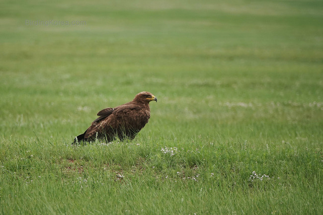 Birds in Mongolia