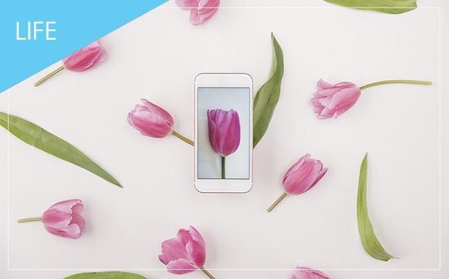 봄에 가볼 만한 곳, 2019 봄꽃 축제 일정 총정리