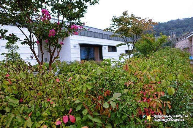 가을색으로 물들기 시작한 우리 집 - 18년9월 봉구네전원일기