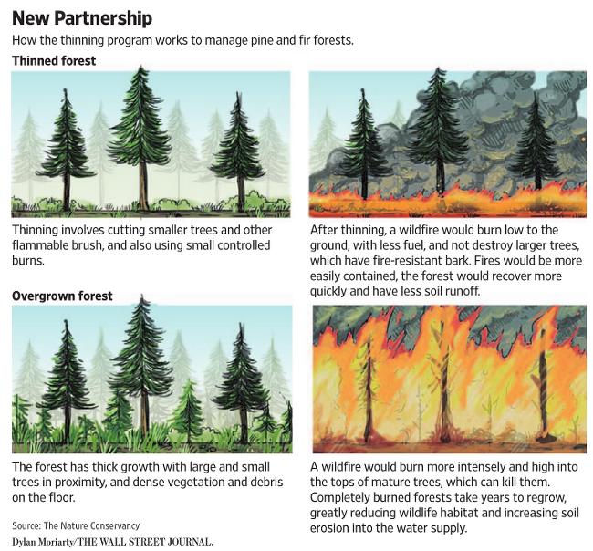 캘리포니아 산불을 예방하기 위한  thinning program