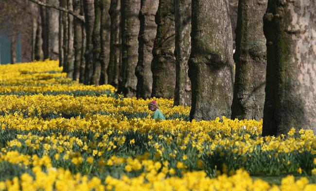 3월의댓글꽃숲