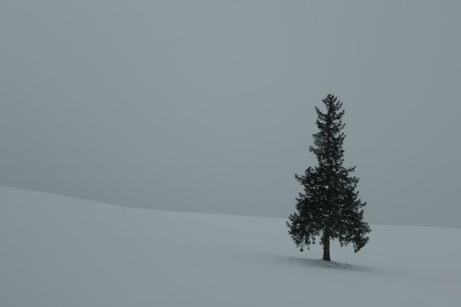 홋카이도 2017/ 6. 비에이의 나무들, 삿포로의 얼음들