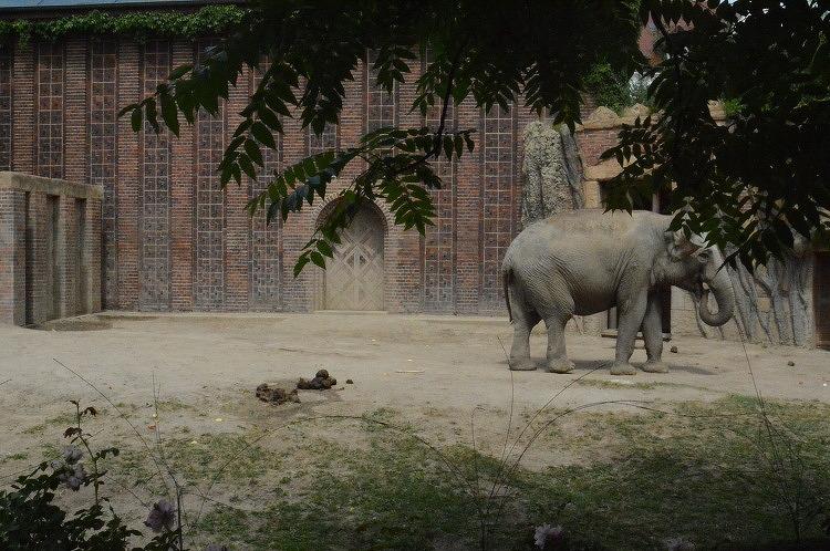 라이프치히동물원 동물이 '살아있는' 이유는(2)