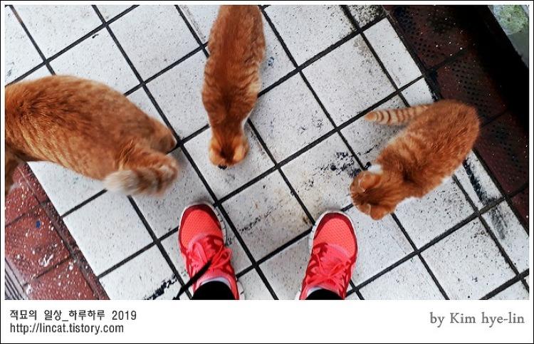 [적묘의 고양이]흔한 냥아치 길막,부산대 고양이들,엄마고양이와 아기고양이들