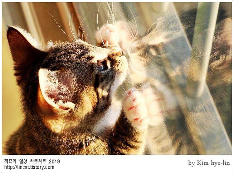 [적묘의 고양이]루이,집사급구,친구님네 임보냥, 2개월령 태비냥이,심장폭행,입양완료