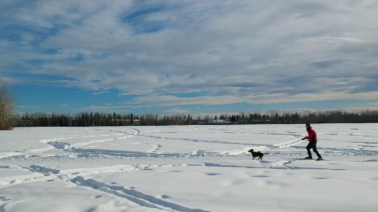 3월 [알래스카 봄 여행] Skijoring in Fairbanks, Alaska - 스키조링 [페어뱅크스 패키지 맞춤 선택 자유 힐링 허니문 신행 신혼여행 전문 현지 관광 투어 가이드]