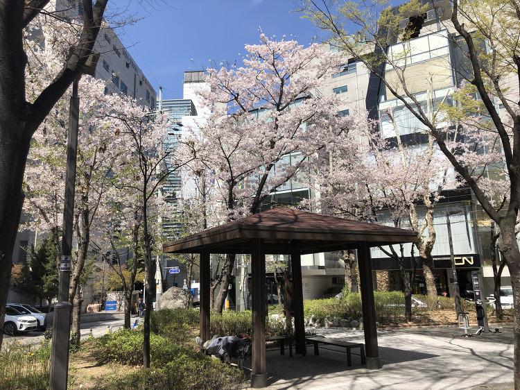 신사동 벚꽃 추천 장소 신사까지공원, 소박한 장소에서 느끼는 봄