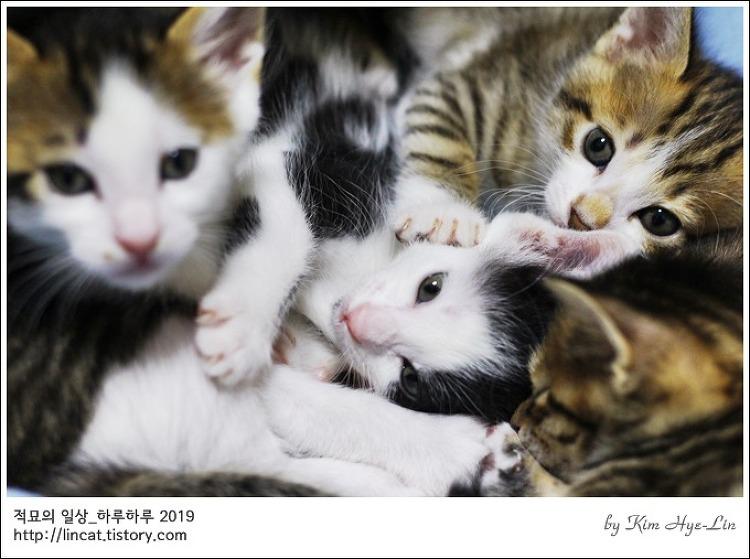 [적묘의 고양이]4월 5일생,아기고양이,5종세트,뽀시래기들,집사급구,입양홍보