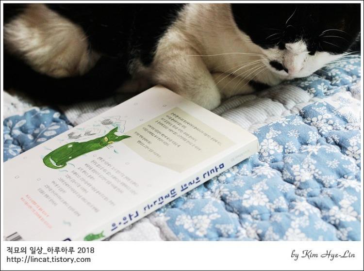[적묘의 고양이책]모든일의 발단은 고양이,독서,책읽기,추천도서,성장소설