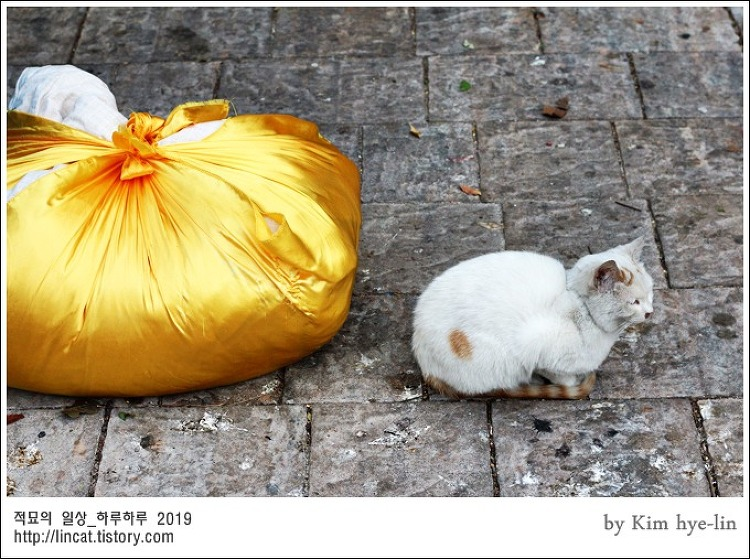 [적묘의 고양이]부산대 고양이들의 겨울나기,캠퍼스고양이