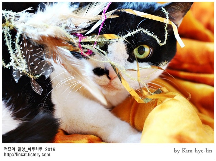 [적묘의 고양이]15살 노묘,할묘니 깜찍이,초지일관,까칠까칠,하악하악,