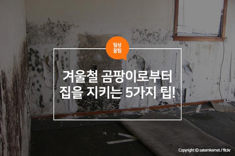 겨울철 곰팡이로부터 집을 지키는 5가지 팁!