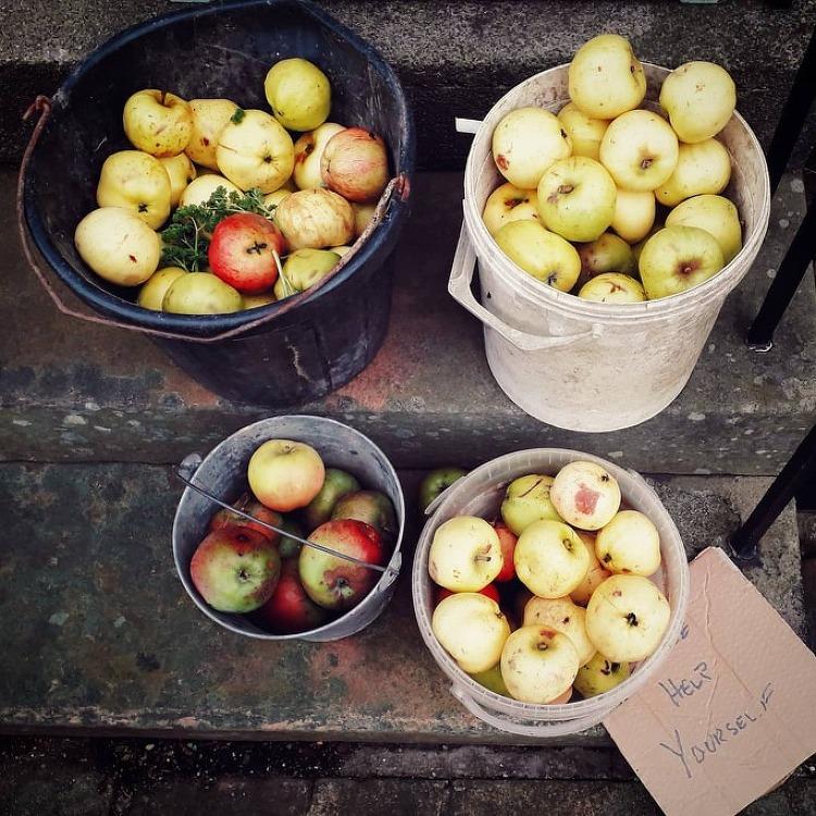 풍성한 사과, 넉넉한 마음 - 공짜 사과 가져 가..