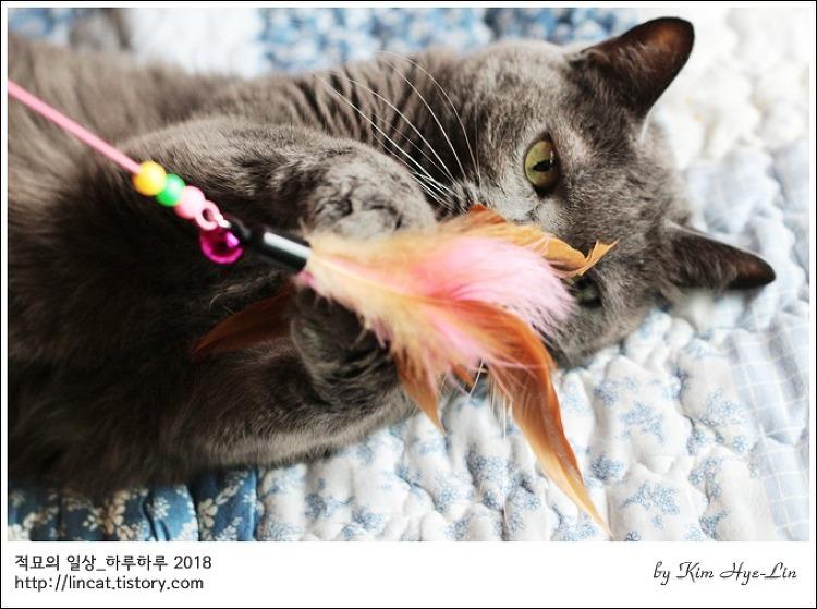 [적묘의 고양이]13살 고양이,할묘니의 격렬한 놀이,월간낚시,파닥파닥