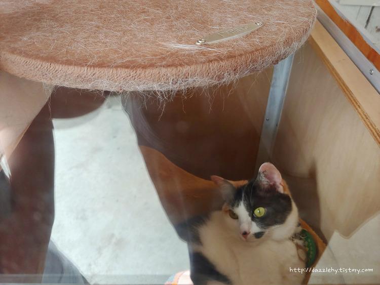 고양이 역장 보러 와카야마역에서 기시선 찾아..