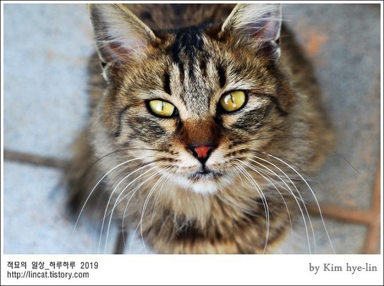 [적묘의 고양이]부산대 공실이, 축입양, 꽃길만 걷자,사지마세요,입양하세요