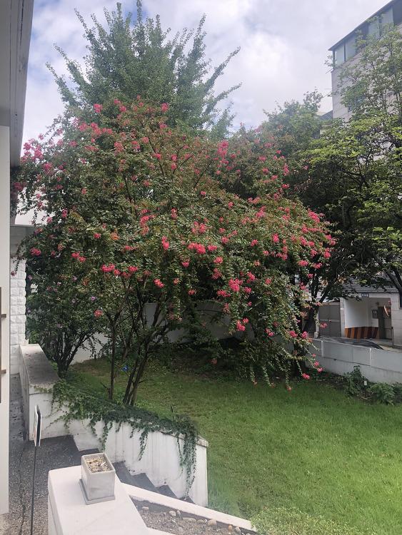 꽃이 가득한 오버마운트