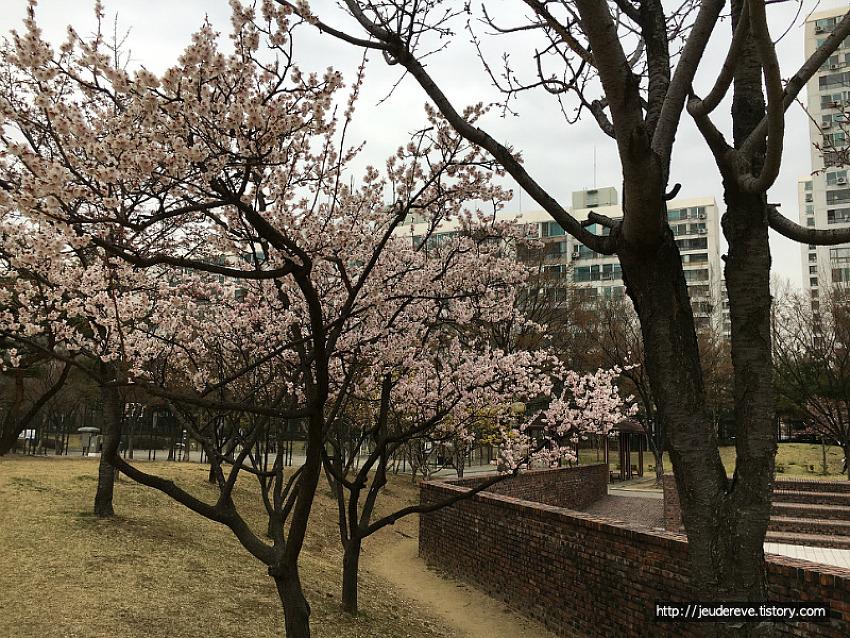 봄꽃구경하며 동네나들이(4월초)