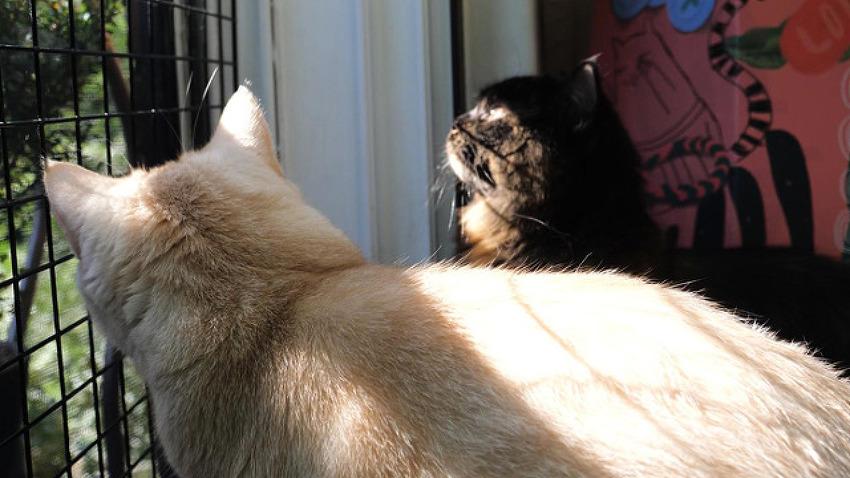 고양이들의 아침