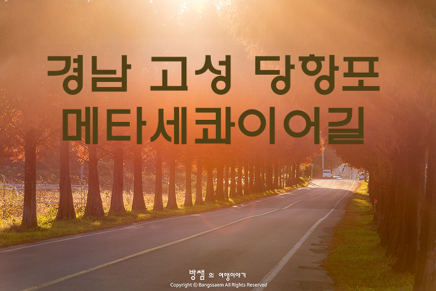 고성 당항포 메타세콰이어길, 햇살 좋은 오후 산책