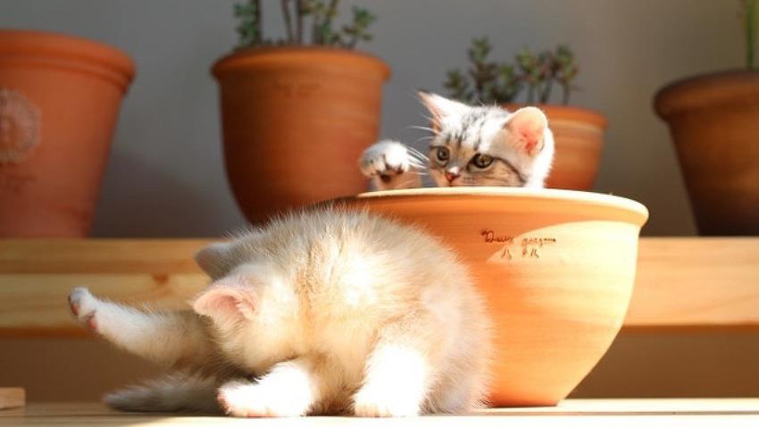 고양이 후추와 생강이의 귀여운 어린 시절